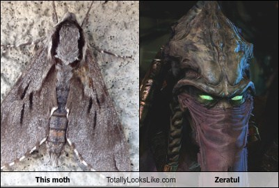 Aliens,zeratul,totally looks like,moths,funny