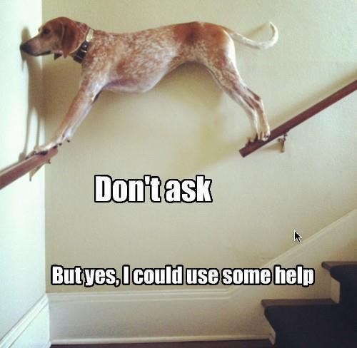 dont-ask stairs help funny - 7651270400