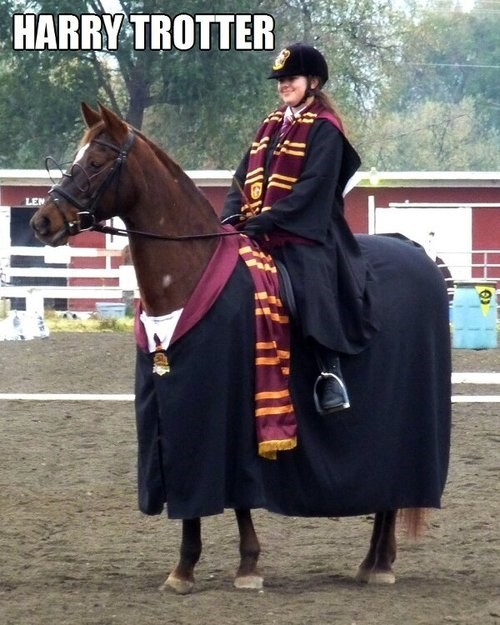 Harry Potter puns horses funny - 7651447808