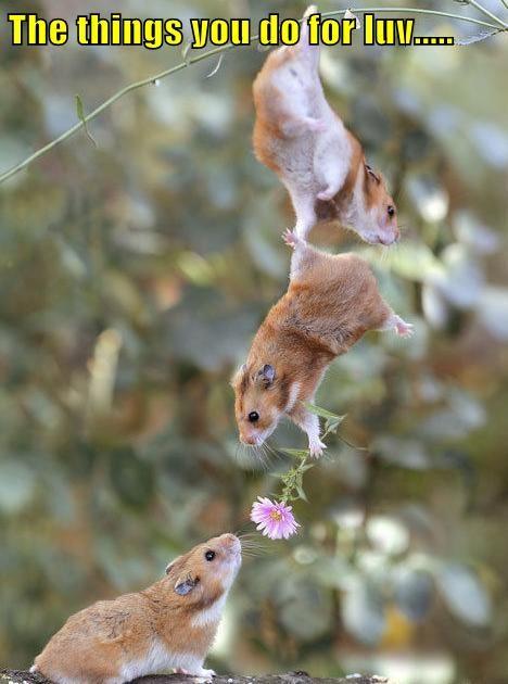 love mice - 7651545088