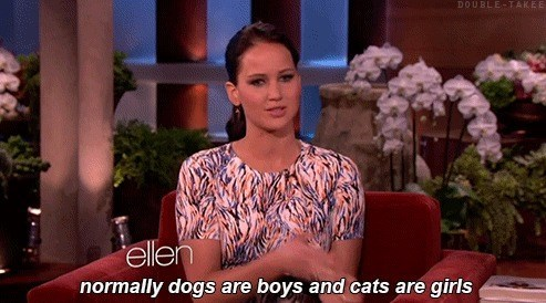 dogs jennifer lawrence ellen Cats - 7651623936