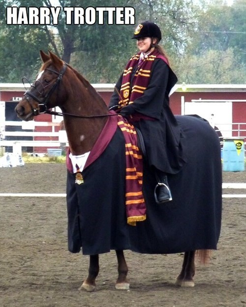 Harry Potter puns horses - 7651657216