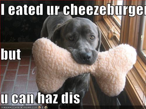 Cheezburger Image 765214976