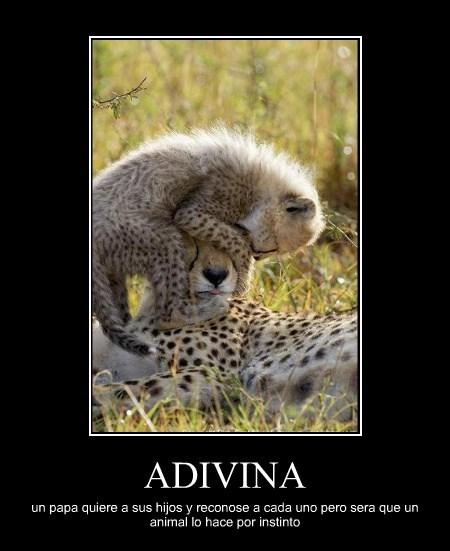 ADIVINA un papa quiere a sus hijos y reconose a cada uno pero sera que un animal lo hace por instinto