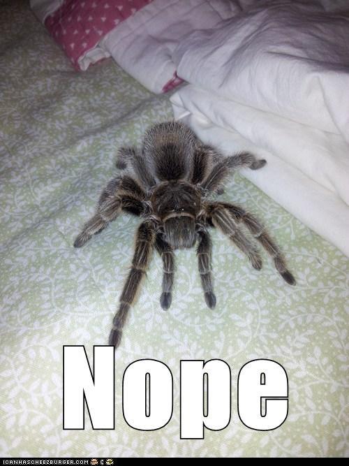 nope,spider