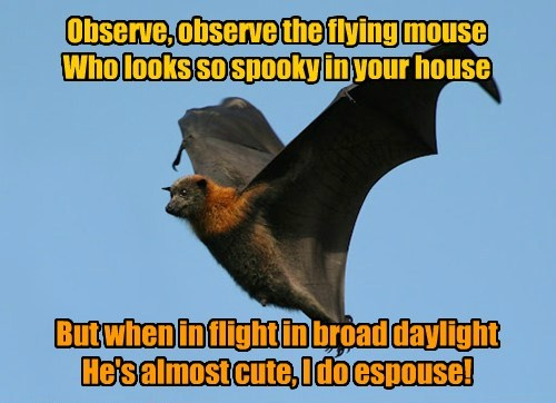 But when in flight in broad daylight He's almost cute, I do espouse! Observe, observe the flying mouse Who looks so spooky in your house