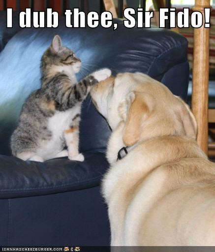 dogs,fido,Cats,knight,funny