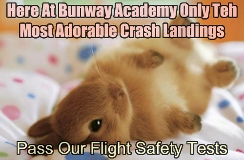 Here At Bunway Academy Only Teh Most Adorable Crash Landings Pass Our Flight Safety Tests