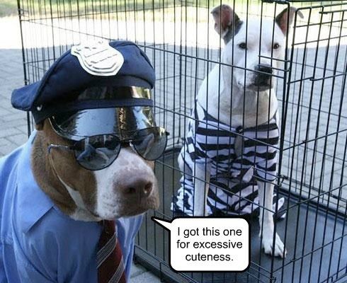 jail cute funny guilty police - 7653764608