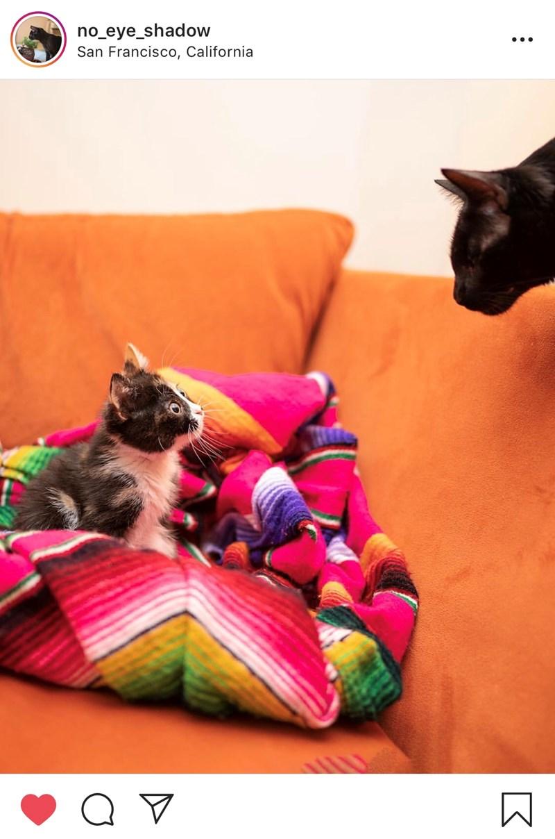 story beautiful cute Cats love story instagram love cat dad - 7653893