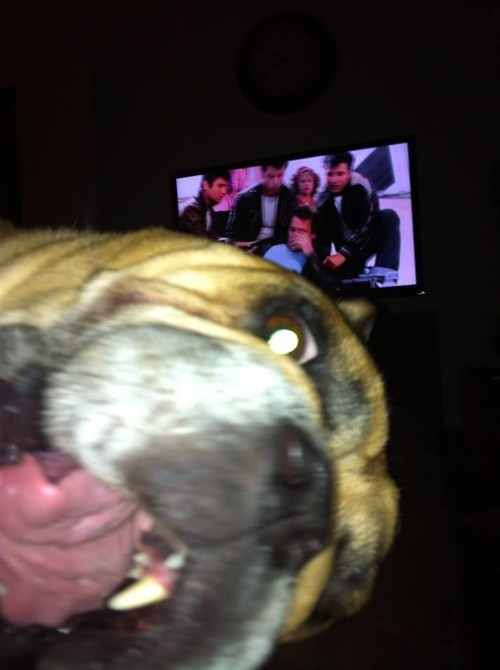 photobomb dogs Kenickie funny grease - 7654085376