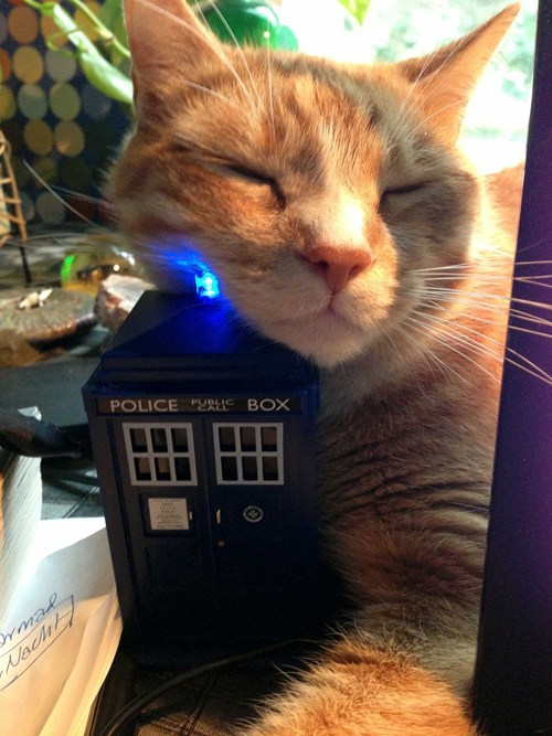tardis cute doctor who Cats - 7654234112