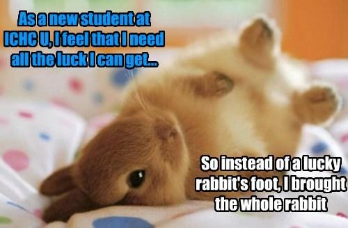 ichc university rabbits-foot bunny funny - 7654385152