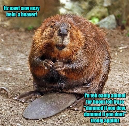 dam beaver crap funny - 7654560768