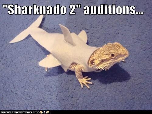 sharknado lizard funny - 7654631168