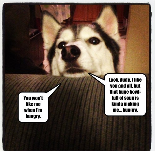 hungry,husky,evil,food
