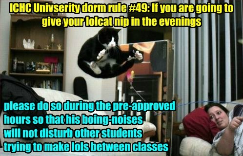 ICHC Univserity dorm rule #49: If you are going to give your lolcat nip in the evenings please do so during the pre-approved hours so that his boing-noises will not disturb other students trying to make lols between classes