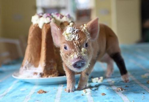 pigging out food funny - 7655186176
