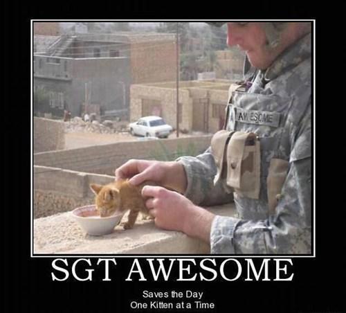 random act of kindness kitten cute funny - 7655345664