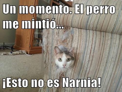 gatos bromas Memes animales - 7655376128