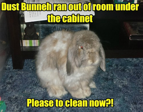cleaning dust bunny funny rabbits - 7655451904