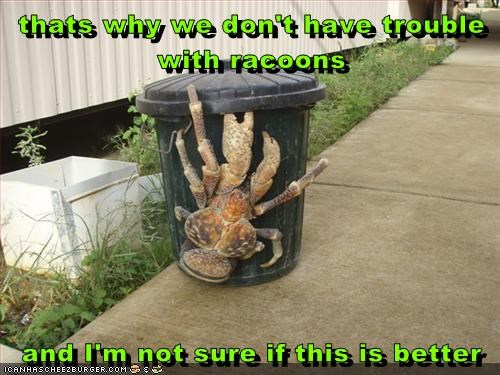 scary,nope,crab,racoons