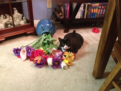 knocked over,flowers,Cats,funny