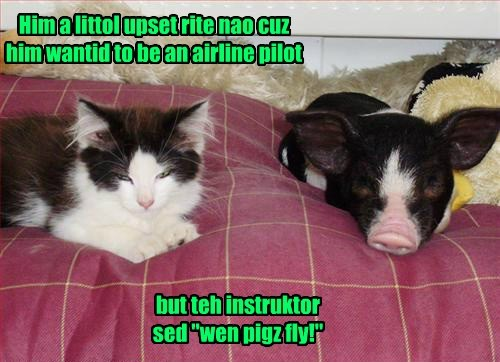 when pigs fly,pig,Cats,funny
