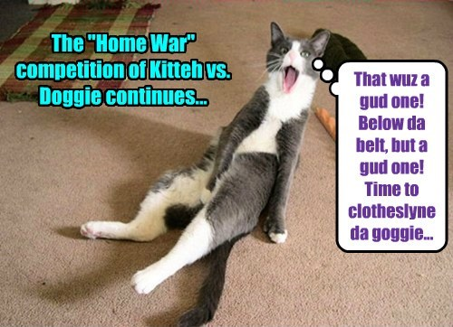 "The ""Home War"" competition of Kitteh vs. Doggie continues... That wuz a gud one! Below da belt, but a gud one! Time to clotheslyne da goggie..."
