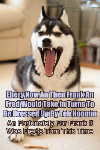 dogs dress up laughing Cats - 7657841408