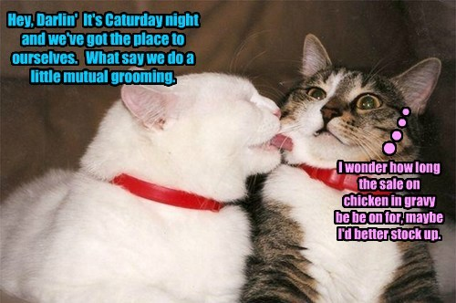 Hey, Darlin' It's Caturday night and we've got the place to ourselves. What say we do a little mutual grooming. I wonder how long the sale on chicken in gravy be be on for, maybe I'd better stock up. n n n n