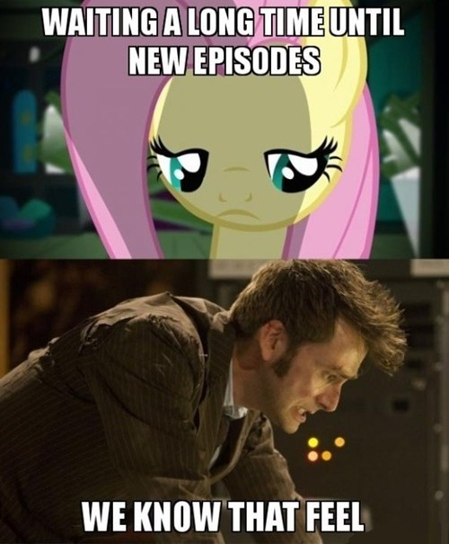 doctor who,fluttershy
