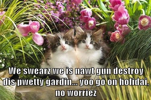 We swearz we is nawt gun destroy dis pwetty gardin... yoo go on holidai, no worriez