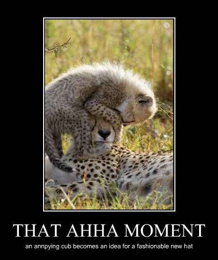 THAT AHHA MOMENT an annpying cub becomes an idea for a fashionable new hat