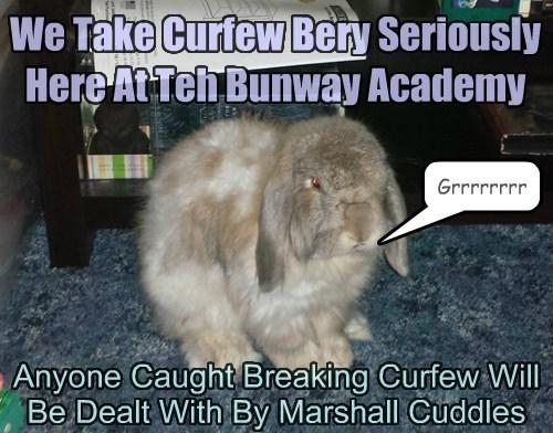 cuddles curfew grumpy bunny funny - 7661278464
