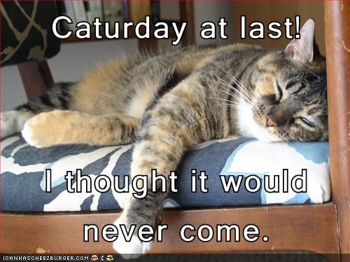 napping Caturday weekend funny - 7661635584