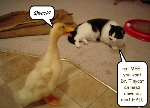 medical care quack funny dr tinycat - 7661654272