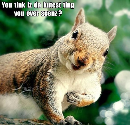 thank you squirrel cute funny - 7662489088