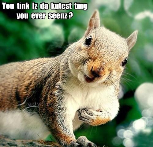 thank you squirrel cute funny - 7662489088