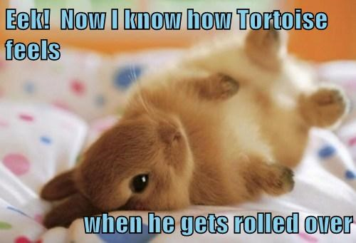 fallen over tortoise bunny funny - 7664022272