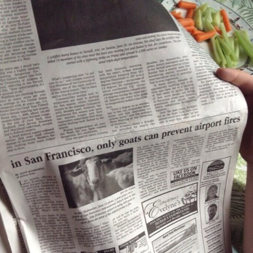 wtf goats funny newspaper - 7664569600