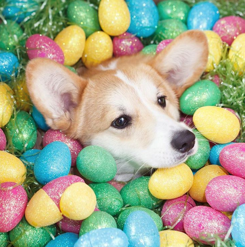 easter dogs Cats - 766469