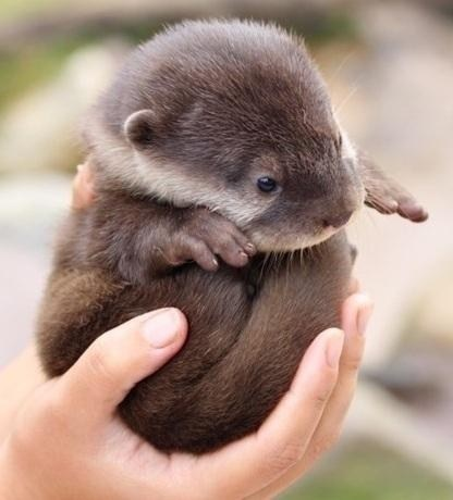 its dangerous to go alone,baby,otter