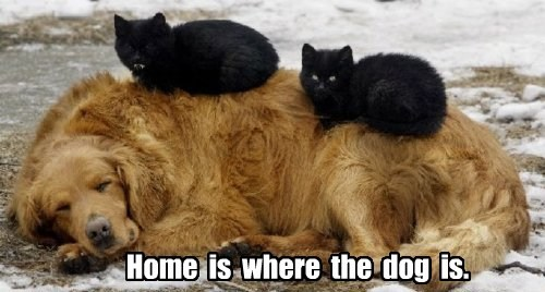 dogs nap Cats home
