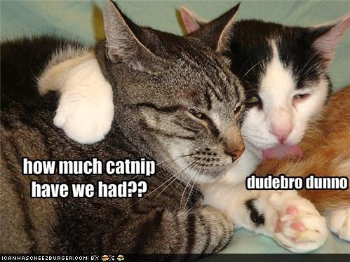how much catnip have we had??