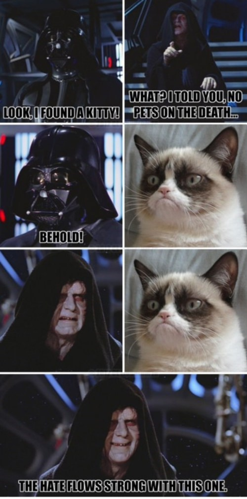 Grumpy Cat star wars - 7666358784