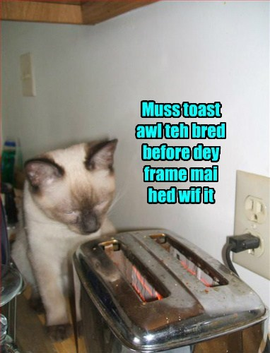 Muss toast awl teh bred before dey frame mai hed wif it