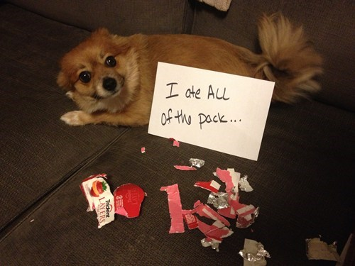 gum,nomnomnom,dog shaming,funny