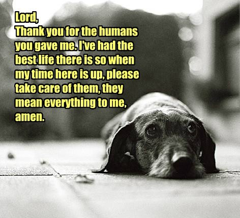 Lord, Thank you for the humans you gave me. I've had the best life there is so when my time here is up, please take care of them, they mean everything to me, amen.