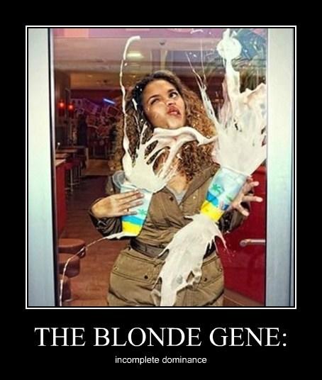 wtf blonde idiots funny - 7666794752